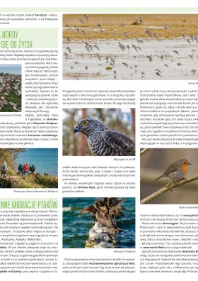 Wiosna, lato, jesień, zima - mapy przyrodnicze strona 2