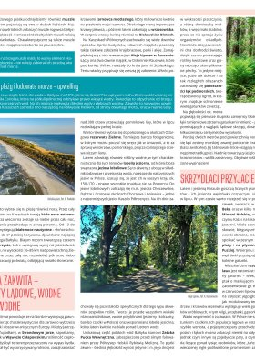 Wiosna, lato, jesień, zima - mapy przyrodnicze strona 4