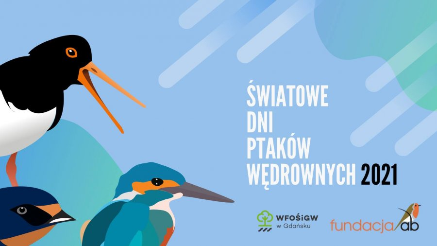 Światowe Dni Ptaków Wędrownych